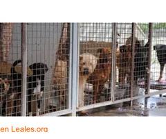 Sacrificios de animales sanos en GC - Imagen 3