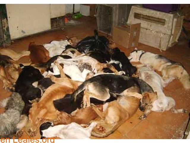 Sacrificios de animales sanos en GC - 4