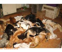Sacrificios de animales sanos en GC - Imagen 4