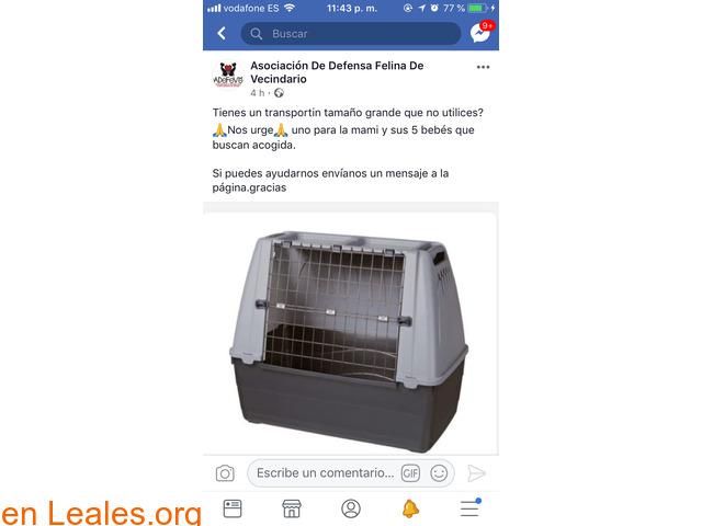 PODRÍAS PRESTAR TRANSPORTIN GRANDE?? - 3