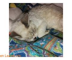 Sacrificio no es eutanasia, no mientas - Imagen 3