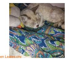 Sacrificio no es eutanasia, no mientas - Imagen 4
