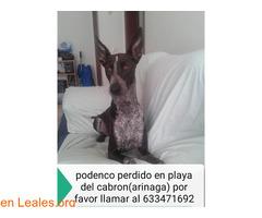 PERDIDO EN ARINAGA. - PLAYA DEL CABRON. - Imagen 3
