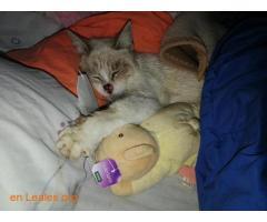 Animales y llaves del albergue Bañaderos - Imagen 2