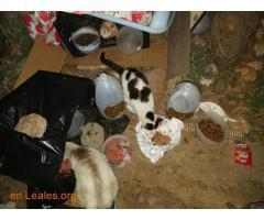 Animales y llaves del albergue Bañaderos - Imagen 6