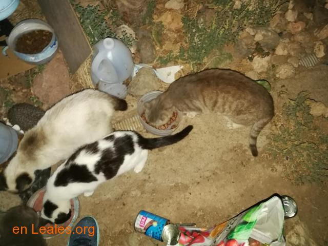 Animales y llaves del albergue Bañaderos - 7
