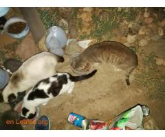 Animales y llaves del albergue Bañaderos - Imagen 7