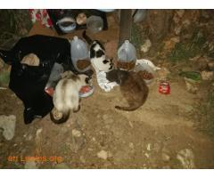 Animales y llaves del albergue Bañaderos - Imagen 8